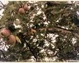 Tereny Pogorzelic - z głodu byśmy nie pomarli  :) Przy brukowej drodze, na skraju pola obficie rosły pyszne jabłka  :)
