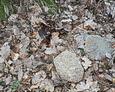 Kamienne pozostałości nagrobków