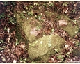 Kleszczyniec - pozostałości mogił