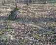 Ledwie widoczna kamienna rama mogiły z cokołem stylizowanym na ścięty pień drzewa