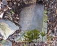 Jedna z całych tablic odnalezionych pod liśćmi