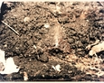 Metalowe pozostałości być może po bramie na terenie dawnego kirkutu w Lęborku