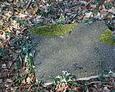Przewrócony i zdewastowany kamienny element nagrobka