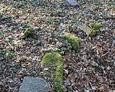 Resztki kamiennego wału wyznaczającego granice cmentarza