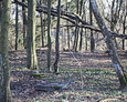 Zdewastowany teren cmentarza w Rębowie