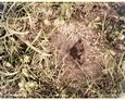 Sarbsk - pozostałości po ogrodzeniu (?)