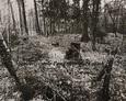 Teren ewangelickiego cmentarza w Nowęcinie w latach 80-tych XX wieku