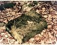 Pozostałości cmenatrza w Małoszycach