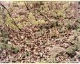 Roszczyce - fragment kamiennego ogrodzenia