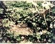 Pozostałości na terenie kirkutu w Lęborku