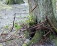 Fragment żeliwnego ogrodzenia