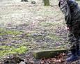 W niektórych miejscach odnaleźć można kamienne elementy nagrobne