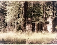 Bukowina - teren dawnego pola namiotowego