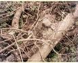 Pogorszewo - krzyż kamienny pod powalonymi gałęziami i drzewkami