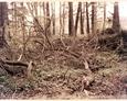 Pogorszewo - na całym terenie cmentarza leżą powalone krzaki i drzewa