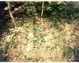 Cmentarz w Leśnicach (za szkołą)