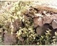 Łebień - pozostałości oryginalnego ogrodzenia