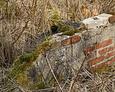 Poszczególne elementy ścian zaczął porastać mech