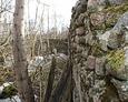 Ściana porośnięta mchem