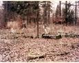 Nagrobki na cmentarzu w Oskowie
