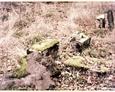 Pozostałości nagrobków; na pierwszym planie przewrócony kamienny krzyż (Oskowo)