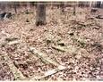Pozostałości nagrobków (Oskowo)