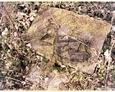 Wilkowo Nowowiejskie