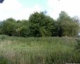 Charakterystyczna kępa gęstych drzew, skrywa interesujące nas miejsce