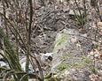 Gdzieniegdzie widoczne są porozrzucane cegły /albo wyrzucany był tu gruz i śmieci albo jest to pozostałość po jakiejś znajdującej się tu niegdyś konstrukcji - kapliczki? grobowca?/