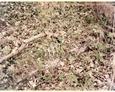 Sasino - kamienne pozostałości ogrodzenia