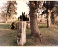 Sasino - lapidarium