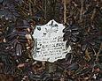 Na niektórych drewnianych krzyżach zachowały się tabliczki inskrypcyje i przytwierdzona figurka ukrzyżowanego Chrystusa