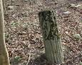 Kolejny cokół stylizowany na ścięty pień drzewa