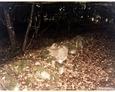 Podkomorzyce - kamienne ogrodzenie wyznaczające granice cmentarza ewangelickiego
