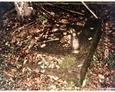 Podkomorzyce - przewrócony kamienny postument