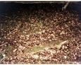 Podkomorzyce - kamienna rama mogiły