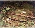 Podkomorzyce - pozostałości nagrobków