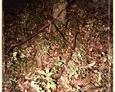 Podkomorzyce - nagrobek ze stojącym postumentem w kształcie pnia drzewa