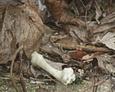 Wszędzie pełno śmieci i szczątków zwierząt