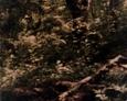 Krępa Kaszubska - pozostałości grobowca