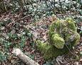 Zdewastowane pozostałości nagrobków przy wejściu na cmentarz