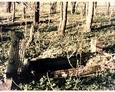 Kamienna rama mogiły z cokołem w kształcie pnia drzewa
