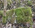 Zniszczona kamienna podstawa pod krzyż całkowicie zarośnięta mchem