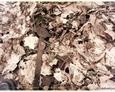 Sulęczyno - cmentarz ewangelicki
