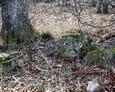 Pozostałości kamiennego ogrodzenia