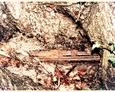 Pozostałości grobowca na terenie dawnego żydowskiego kirkutu w Lęborku
