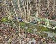 Fragment jednego z zachowanych nagrobków na cmentarzu w Janowicach