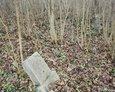 Zdewastowany teren cmentarza w Janowicach