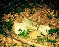 Fragmenty zniszczonego nagrobka