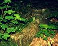Kamienna rama nagrobka/widoczny oparty drewniany krzyżyk